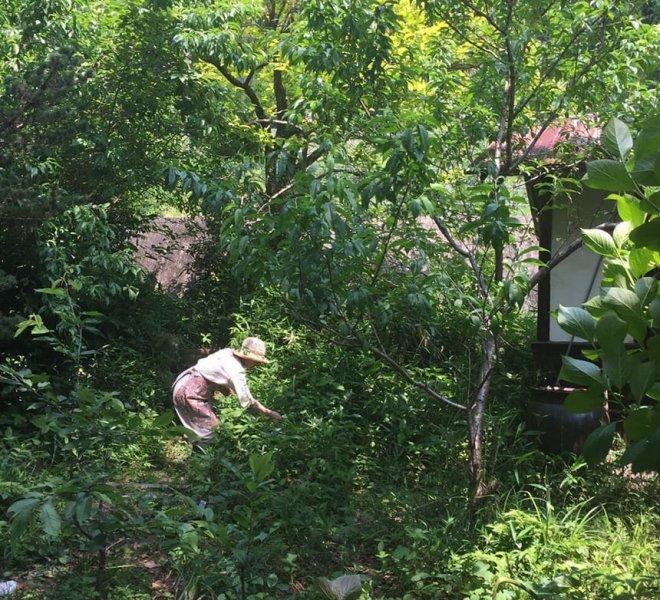 オオニシ恭子先生自宅の庭